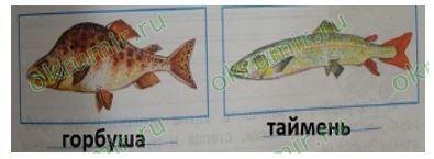 рыбы дальнего востока и сибири ловля рыбы