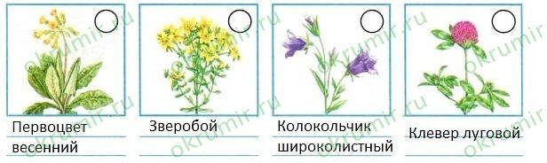 растения луга названия и фото